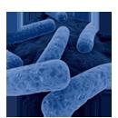 Clostridium difficile -...