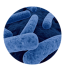 Clostridium difficile - management infekcí